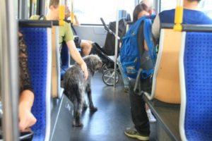 トラムに乗車している犬。割と普通な光景